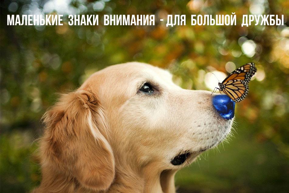 malenkie-znaki-vnimaniya-dlya-bolshoy-druzhby